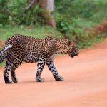 Tour Sri Lanka -Parco di Yala